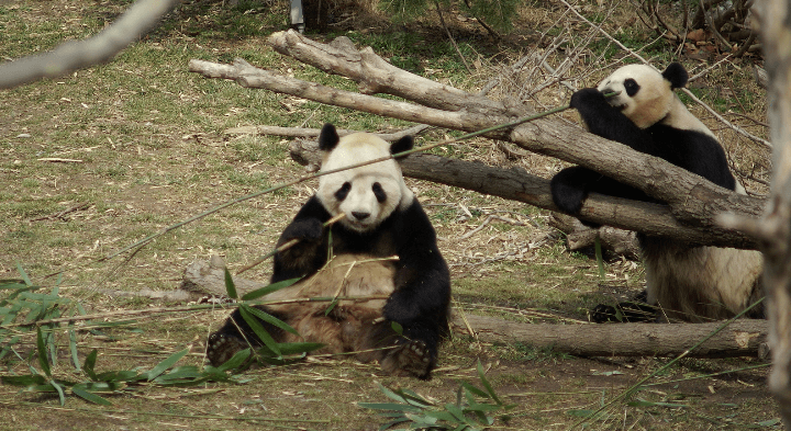 Bamboo Environmental Impact